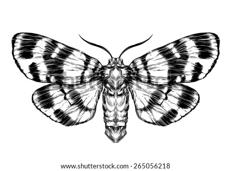 butterfly sketch detailed