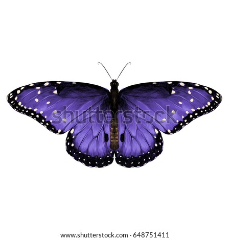 butterfly top view of