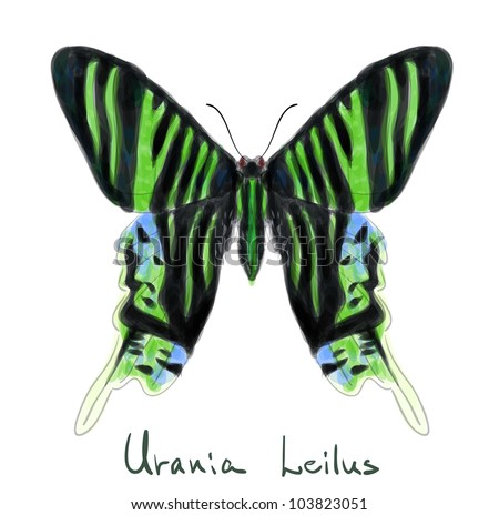 Butterfly Urania Leilus. Watercolor imitation. Vector illustration.