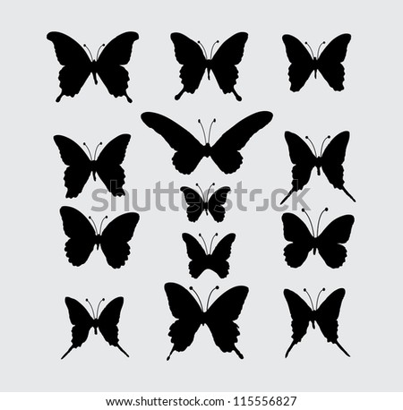 butterfly  vector  5