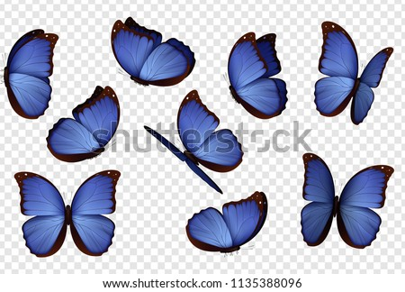 butterfly vector purple
