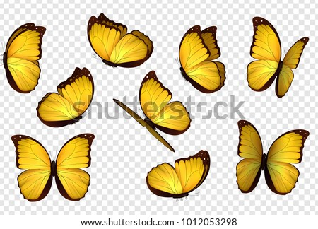 butterfly vector yellow