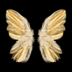Butterfly wings with feathers. Modern  abstract art Golden Feather. Vector illustration.