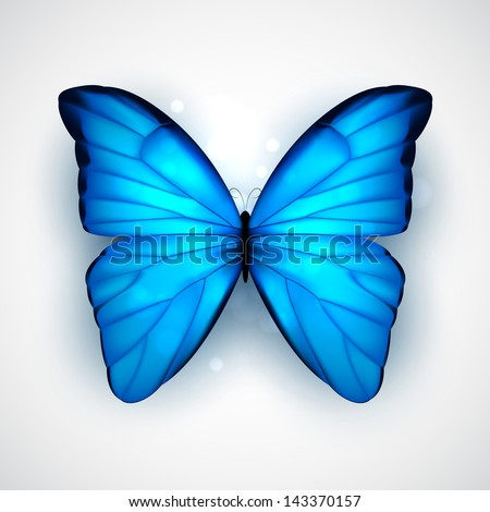 butterfly with big blue wings