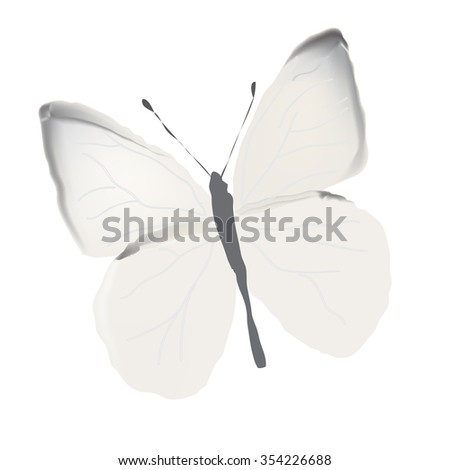 cabbage butterfly painted with