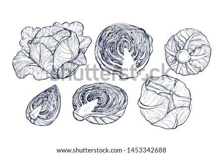 Cabbage collection botanical hand drawn Isolated vector illustration. Organic vegetarian product. Cabbage set applicable for restaurant menu or packaging, label, poster, print. Engraving style. Сток-фото ©