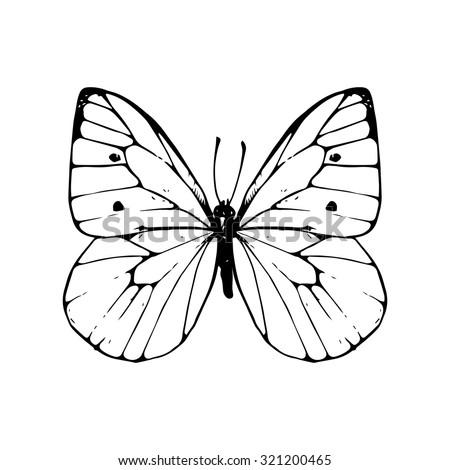 cabbage moth  hand drawn