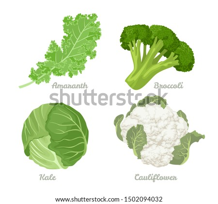 Cabbage set. Vector illustration of cabbage, kale, broccoli, Cauliflower Isolated On A White Background. Healthy organic food, fresh green vegetables in cartoon flat style. Сток-фото ©