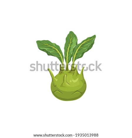 Cabbage turnip isolated Kohlrabi vegetable food icon. Vector german cabbage turnip, biennial vegetable low, stout cultivar of wild cabbage. Raw root, realistic vegetarian food with green leafy leaves Сток-фото ©