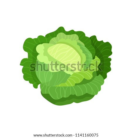 Cabbage with big bright green leaves. Fresh and healthy food. Vegetarian nutrition. Organic ingredient for salad. Flat vector icon