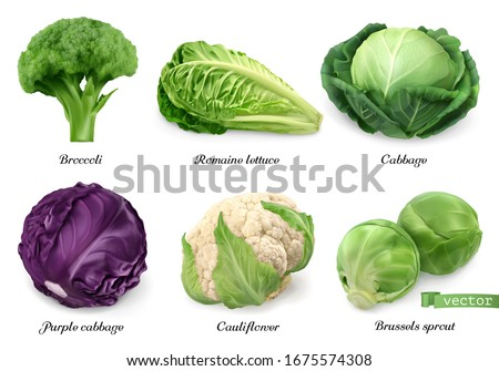 Cabbages and lettuce, leaf vegetables realistic food objects. Broccoli, romaine lettuce, green and purple cabbages, cauliflower, brussels sprout. 3d vector icon set