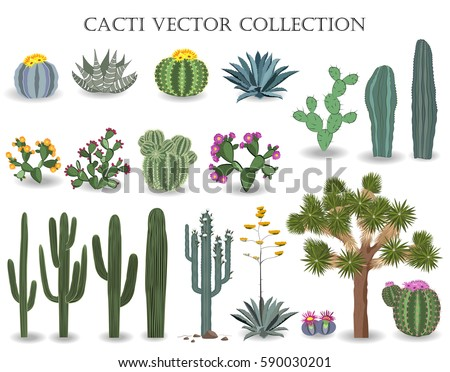 Cacti vector collection. Saguaro, agave, joshua tree, prickly pear and other cactuses