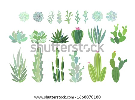 Cactus and succulent plants isolated on white. Vector illustration with evergreen succulent flowers. Aesthetic floral clip art. Vector EPS 10 illustration.