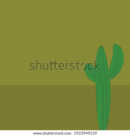cactus background in the desert