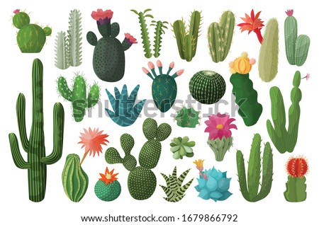Cactus isolated cartoon set icon. Vector illustration mexican cacti on white background. Vector cartoon set icon cactus with flower. Сток-фото ©
