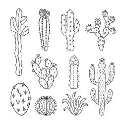Cactus vector illustrations. Hand drawn outline cactus set. Cactus plants nature elements