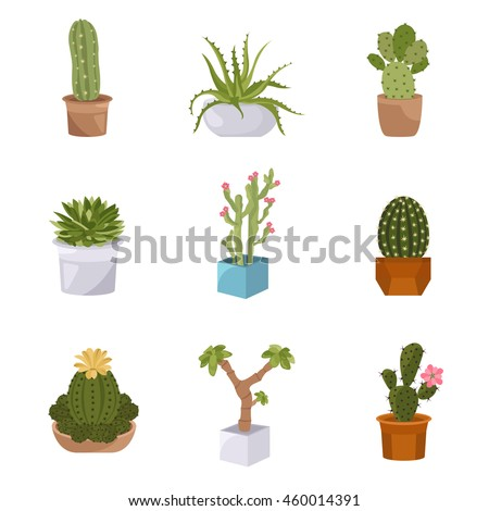 cactuses and succulents icon