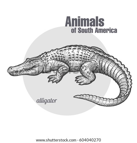 caiman hand drawing of