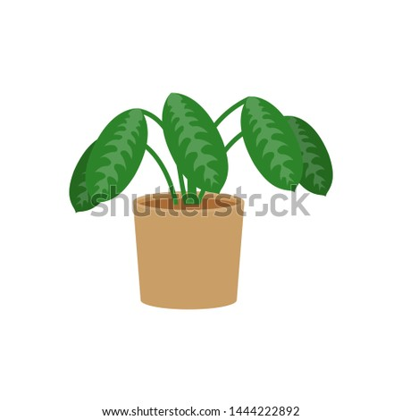 Calathea potted flat icon, indoor plant, indoor plant, flower vector illustration isolated on white background
