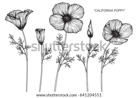 Poppy flowers download free vector art stock graphics images california poppy flowers drawn and sketch with line art on white backgrounds mightylinksfo
