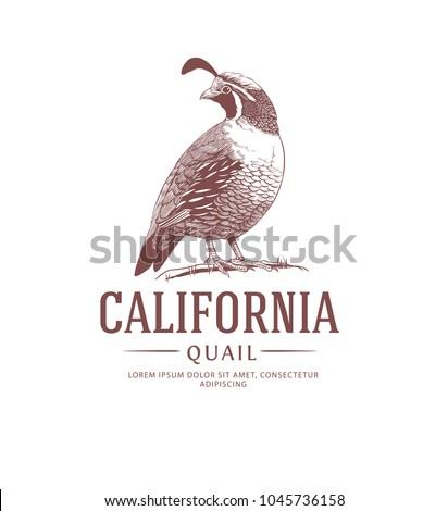 california quail vintage logo