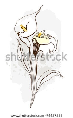 calla floral illustration of