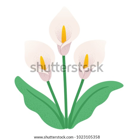 calla lily flower bouquet