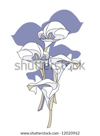 Calla Lily Flowers vector is hand drawn original artwork.