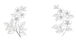 Calligraphy cherry blossom. Cute hand drawn isolated sakura branch. Sacura isolated over white. Branch of Japanese cherry blossoms with beautiful flowers. Vector illustration.