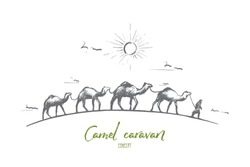 Camel caravan concept. Hand drawn camels walk through the desert. Caravan going through the sand dunes isolated vector illustration.
