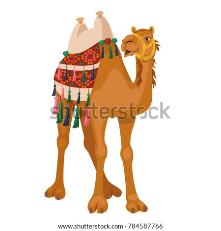 Camel cartoon vector illustration on white.  Decorated camel with seat for a ride.