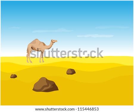 Camel in the Desert, vector illustration.