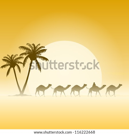 camels and palms   palm trees