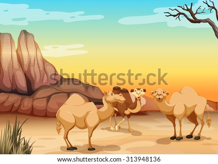 camels living in the desert