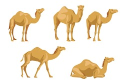 Camels sideways illustrations set. Cartoon collection of wild animals with humps, caravan of dromedary in desert isolated in white background. Africa, tourism concept for poster, flyer or postcard