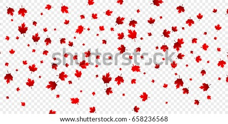 Canada Day maple leaves background. Falling red leaves for Canada Day 1st July.