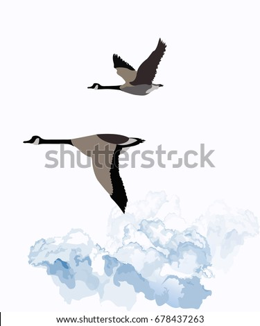 Canadian geese migrating