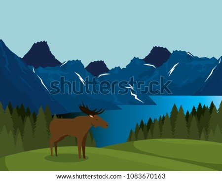 canadian landscape with moose