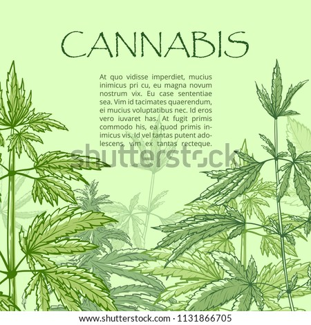 Cannabis hand draw poster. Drug, illegal product green leaves and flowers of the hemp plant with copy space for text. Vector marijuana sketch illustration