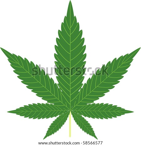 cannabis isolated on white