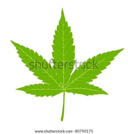 Cannabis leaf. Fully editable by layers, vector (eps8).