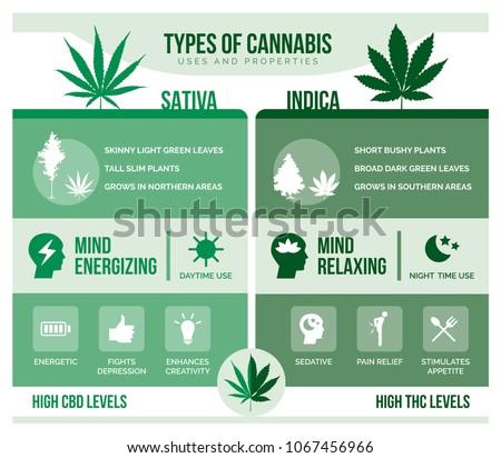 cannabis sativa and cannabis
