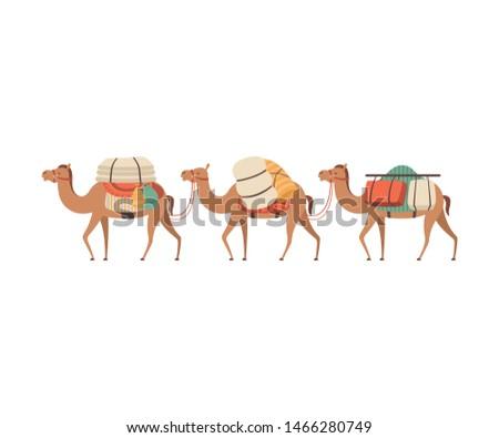 caravan of camels  desert