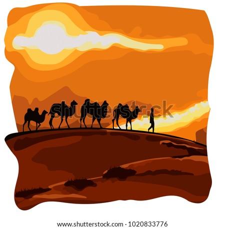 caravan of camels goes in the