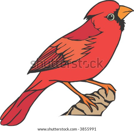 Cardinal Bird Flying on Cardinal Bird Stock Vector 3855991   Shutterstock