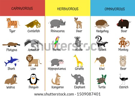 Carnivores, herbivores, omnivores. Animals by category. Educational card for children. Zoology for schoolchildren and preschoolers. Bear, shark, anteater, giraffe, hippo, kiwi, lion, ostrich Stock foto ©