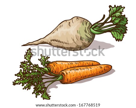 Carrots and sugar beet isolated on white background