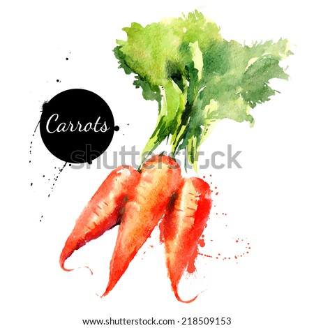 Carrots. Hand drawn watercolor painting on white background. Vector illustration - stock vector