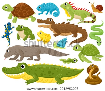 Cartoon amphibians and reptiles. Serpent, reptile and amphibians, frog, iguana and python vector illustration set. Wildlife reptiles and amphibians. Reptile and amphibian lizard, animal wildlife ストックフォト ©