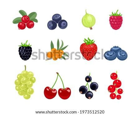 cartoon berry set vector